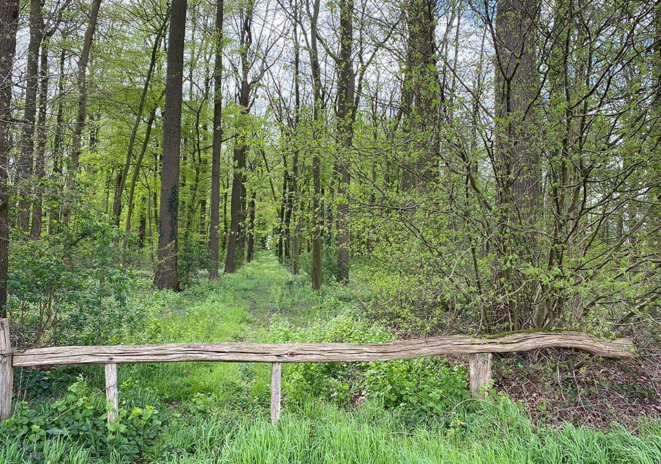Hof Beckhove Waldwirtschaft