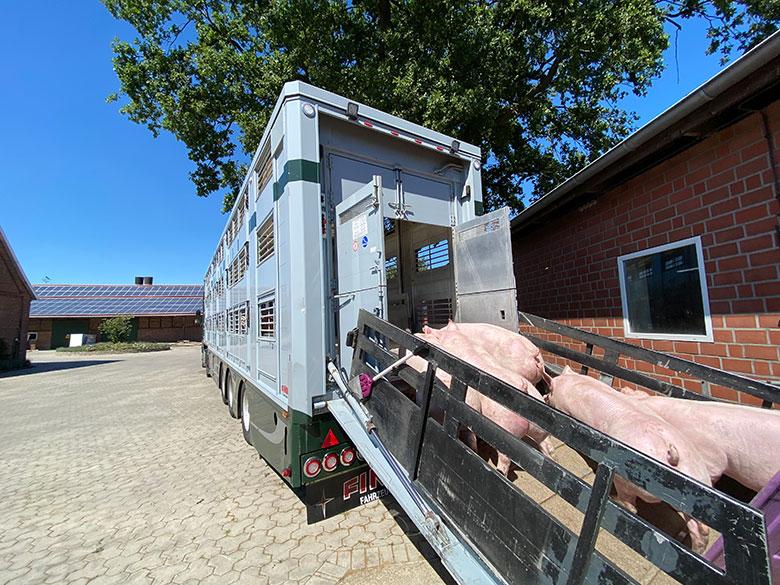Schweinehaltung Hof Beckhove