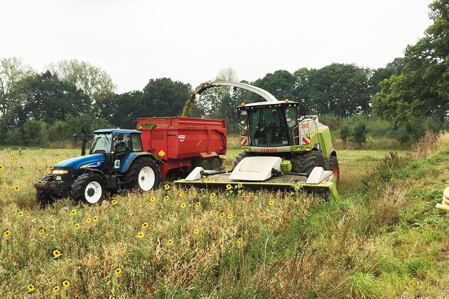 Erneuerbare Energien Biomasse